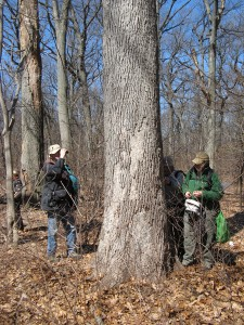looking for Aleurodiscus in Forest Park, Queens